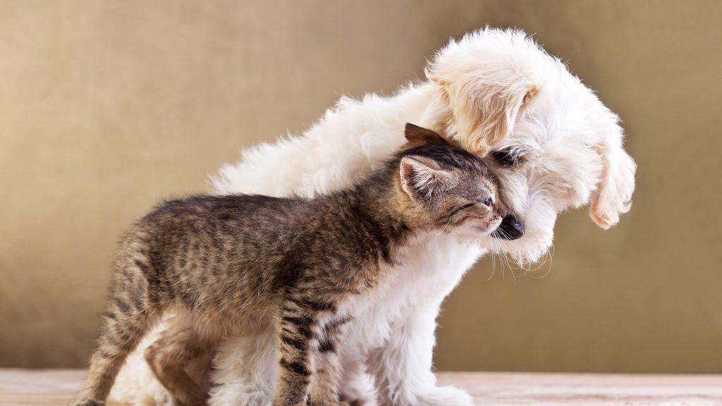 Você sabe o que é Reabilitação Animal?