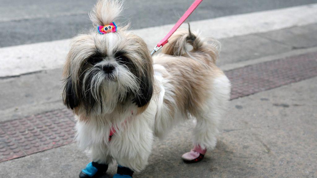 Quando Pets idosos desenvolvem osteoartrose
